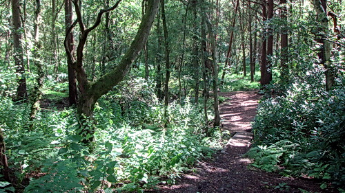 A woodland walk near where Pegasus NLP courses are held